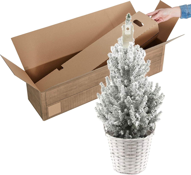 Floral-Direkt Mini Tanne gr/ün Topf H20cm /Ø8cm Tannenbaum Weihnachtsbaum Christbaum k/ünstlich