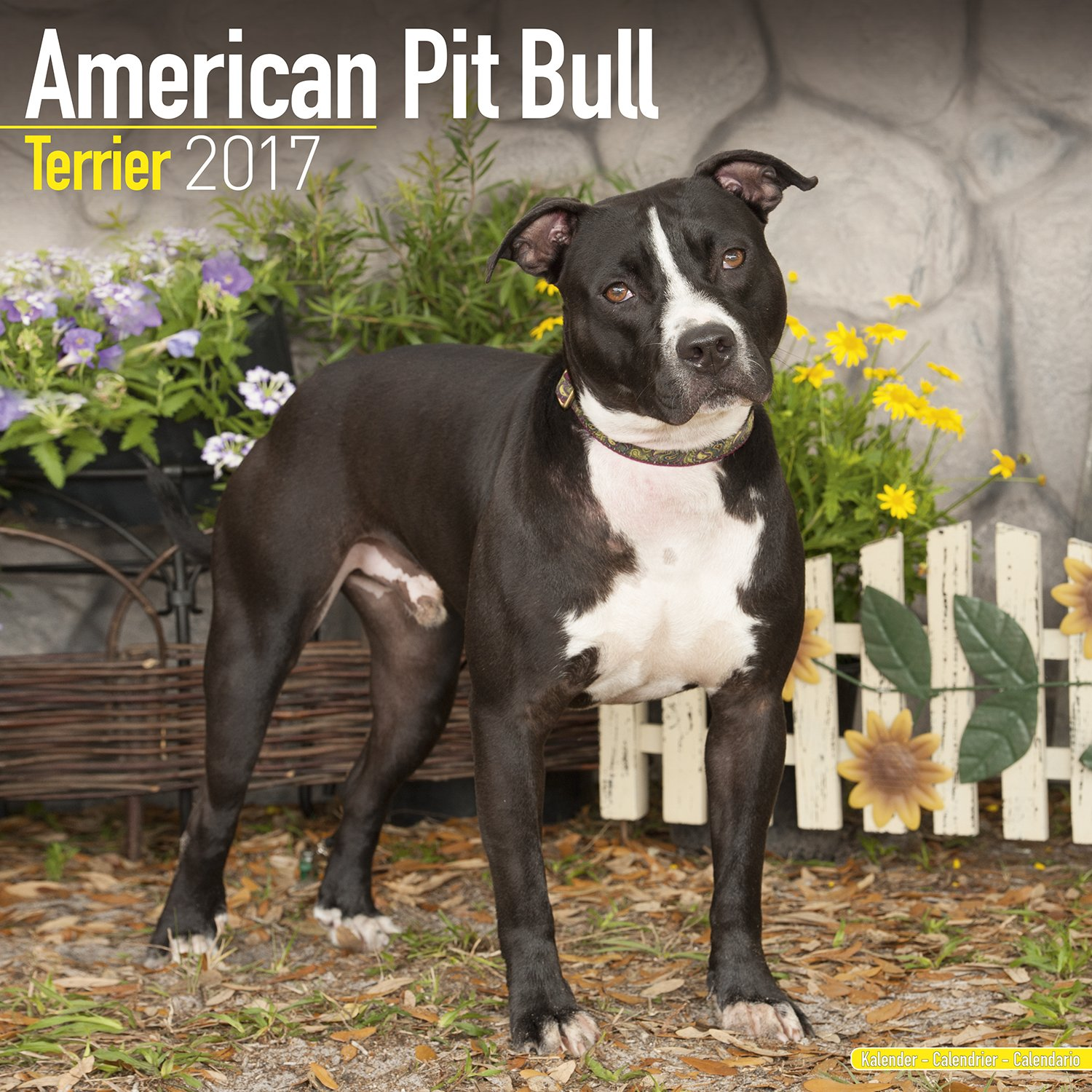 american pit bull terrier calendar 2017 dog breed calendars 2016