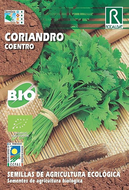 Semillas ECOLOGICAS Cilantro Coriandro 10 g: Amazon.es: Jardín