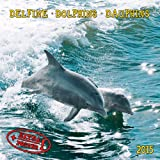 Dolphins 2015