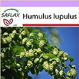 SAFLAX - Luppolo - 50 semi - Humulus lupulus