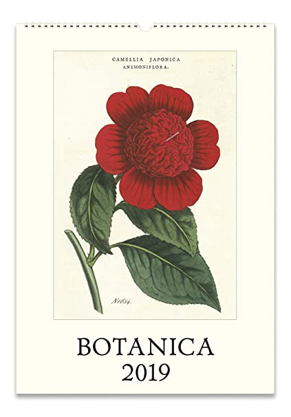 Ou 2019 Calendar Amazon.com: Cavallini Papers & Co. Botanica 2019 Wall Calendar