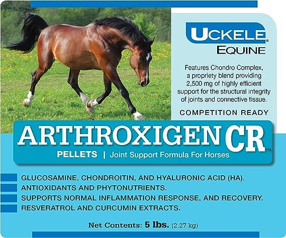 Best MSM Supplements for horses - uckele