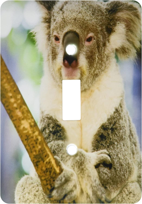 3drose Lsp 70226 1 Australia Brisbane Fig Tree Pocket Koala Bears Single Toggle Switch Switch Plates