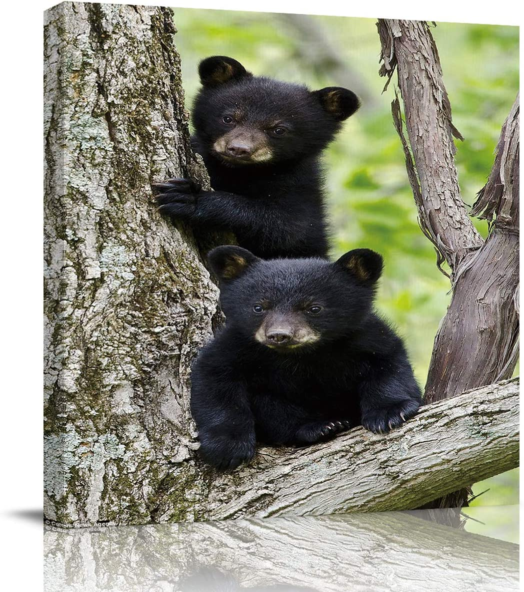 T&H XHome Wall Art Paintings on Canvas Print Cute 3D Little Black Bear Animal Office Artwork Home Decoration Living Room Bedroom Bathroom Giclee Walls Decor,Wood Framed Ready to Hang 20x20in