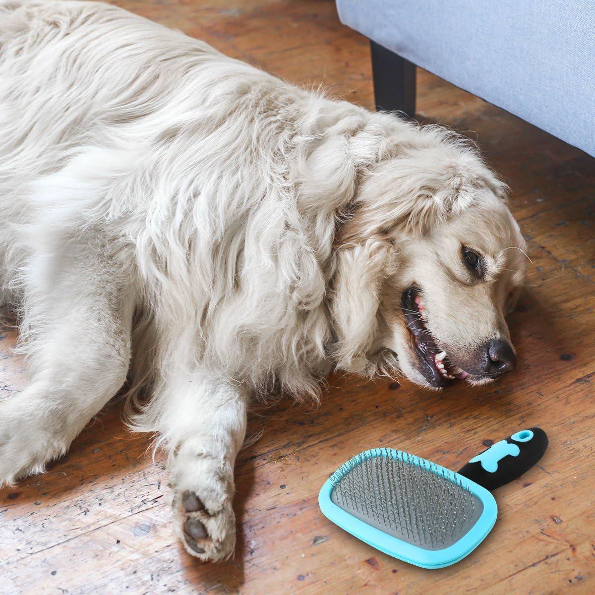 Buy Glendan Slicker brush from Amazon for Treeing Walker Coonhound