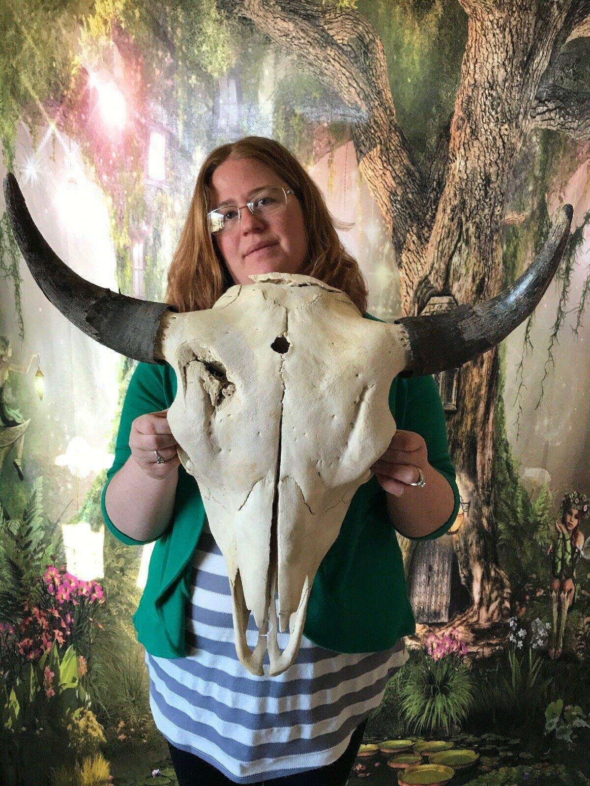 Unique Odd Bull Buffalo Bison Male Skull Animal Mount Head Horn Garden Decor Art