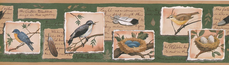 Bird Nest Egg sur Histoire philat/élique Vert Frise papier peint Motif r/étro rouleau de 15/x 17,8/cm