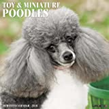Just Toy & Miniature Poodles 2018 Wall Calendar (Dog Breed Calendar)