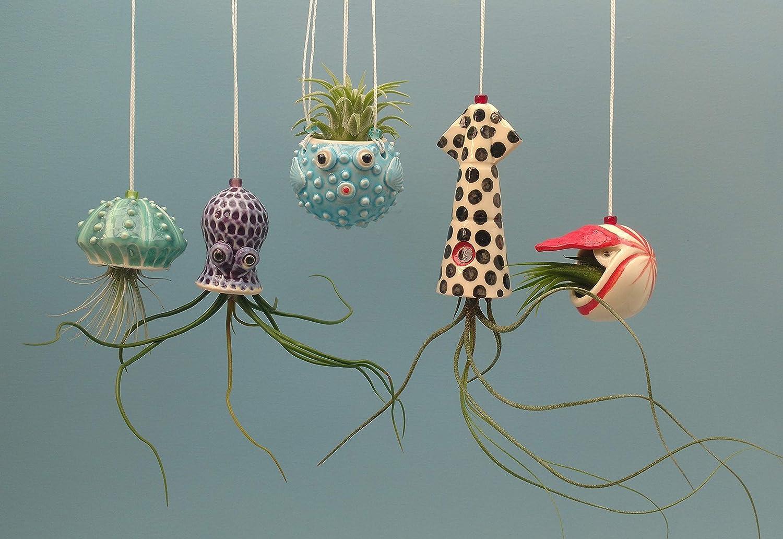Christmas In Octopus Garden >> Amazon Com Mini Octopus Garden Of Ocean Air Plant Hangers Handmade