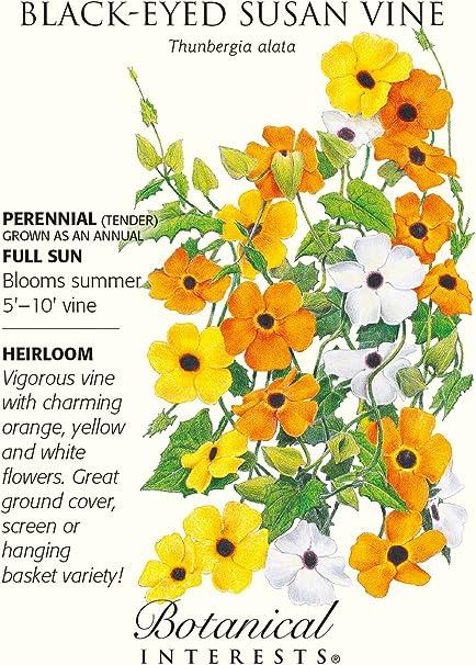 LEMON A-PEEL 10 Seeds Climbing Vine Thunbergia Seeds Annual