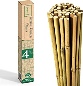 JINOKO Bamboo Stakes - Pack of 25 Premium 4 FT Garden Stakes for Plants - Natural Gardening Supports for Tomato, Cucumber, Peas, Beans & Trees - Indoor Outdoor Climbing Plant Support - Long Sticks