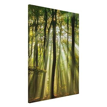 Bilderwelten Pizarra magnética - Sunny Day In The Forest ...