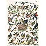 Cavallini Decorative Paper- Bird Chart 20x28 Inch Sheet