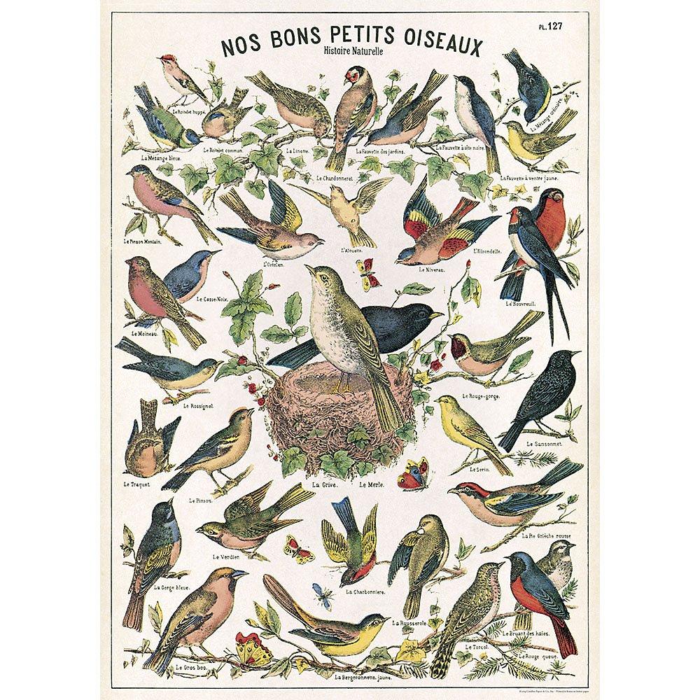 Cavallini Papers Co Rouleau de Papier cadeau Motif graphique oiseau Cavallini Papers & Co Bird Chart