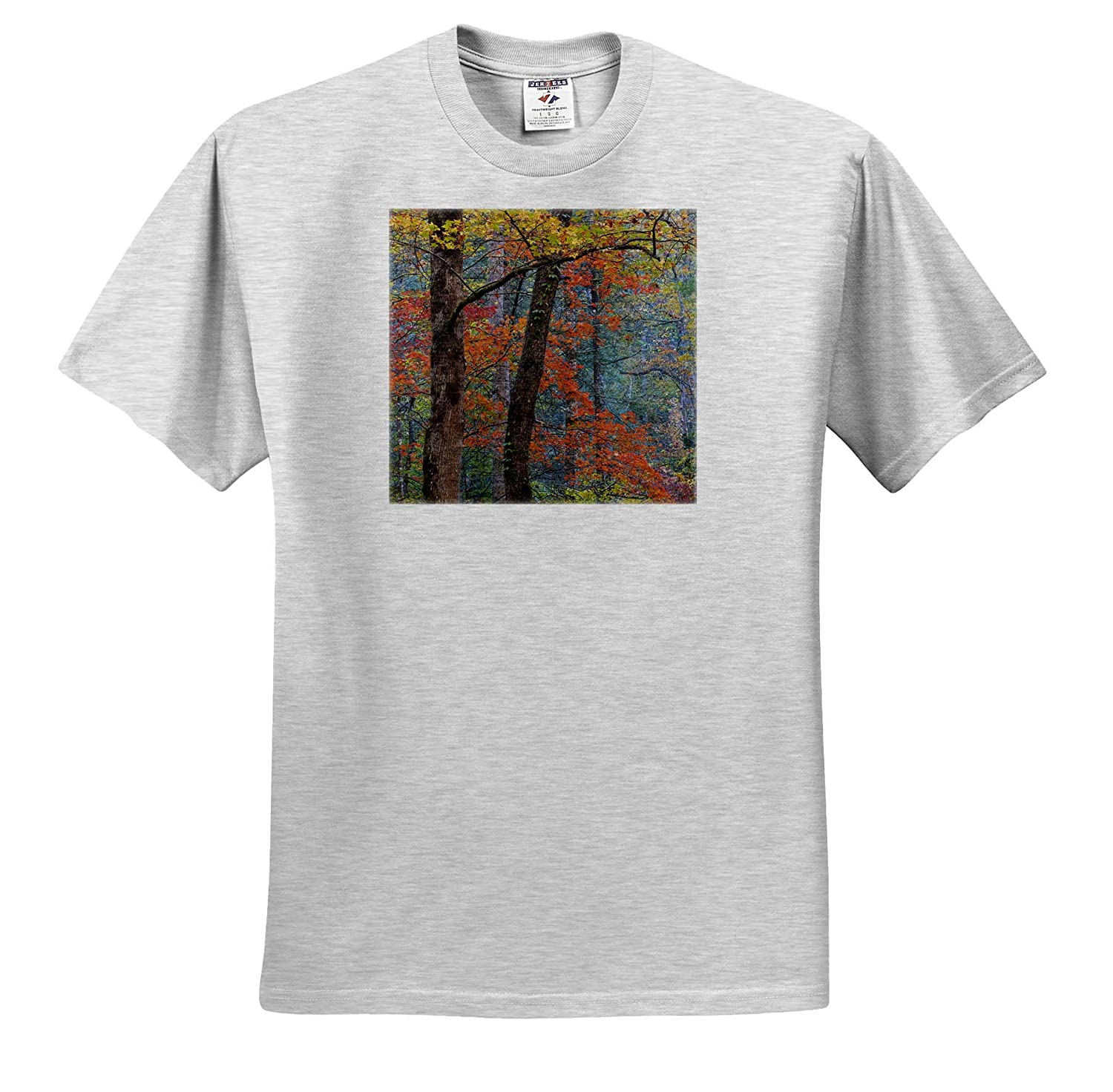 Autumn Tennessee 3dRose Danita Delimont - Adult T-Shirt XL ts/_315020 Forest Scenic in Autumn USA