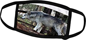 3dRose ET Photography - Wolves - Male Gray Wolf Wanting Food A Wolf Patiently Waiting for his Breakfast - Face Masks (fm_127804_1)