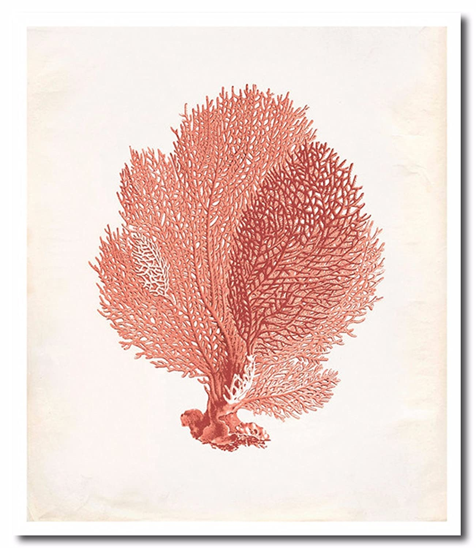Amazon com sea fan coral canvas wall art beautiful picture prints