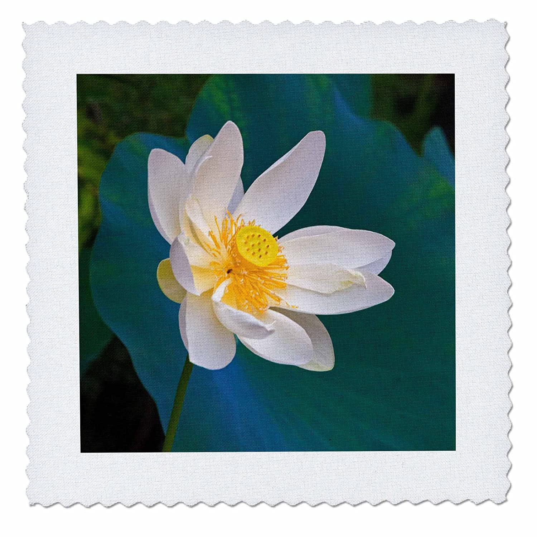 On Sale 3drose Danita Delimont Flowers Lotus Flower Guangxi