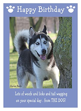 Husky Christmas Cards.Karten Einladungen Husky From Or To The Dog Pet