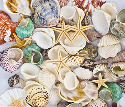 Amazon Famoby Sea Shells Mixed Beach Seashells Starfish For