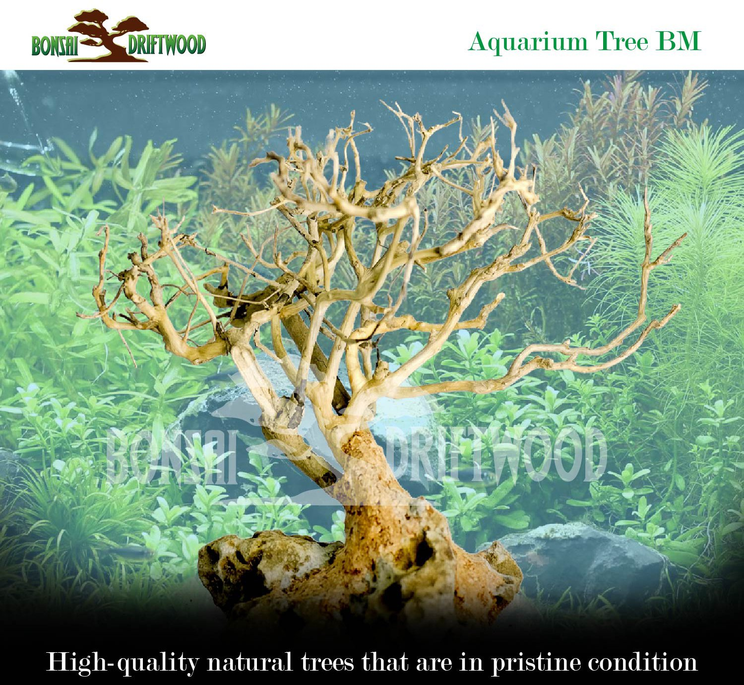 Bonsai Driftwood Aquarium Tree (5 Inch Height) Natural, Handcrafted Fish Tank Decoration | Helps Balance Water pH Levels, Stabilizes Environments | Easy to Install by Bonsai Driftwood (Image #6)