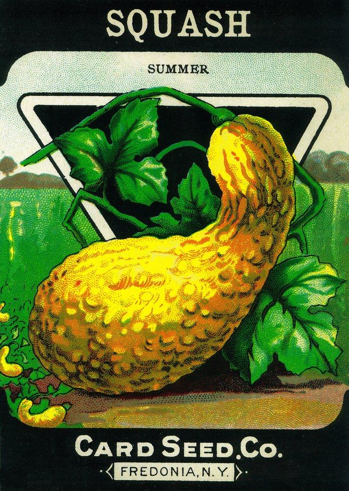 Squash (夏)シードパケット 12 x 18 Art Print LANT-1460-12x18 B017Z0SS4W 12 x 18 Art Print
