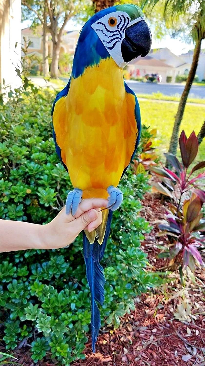 Amazon.com: COMPLETE HANDCRAFTED ULTRA LIGHTWEIGHT PARROT WITH REAL ...