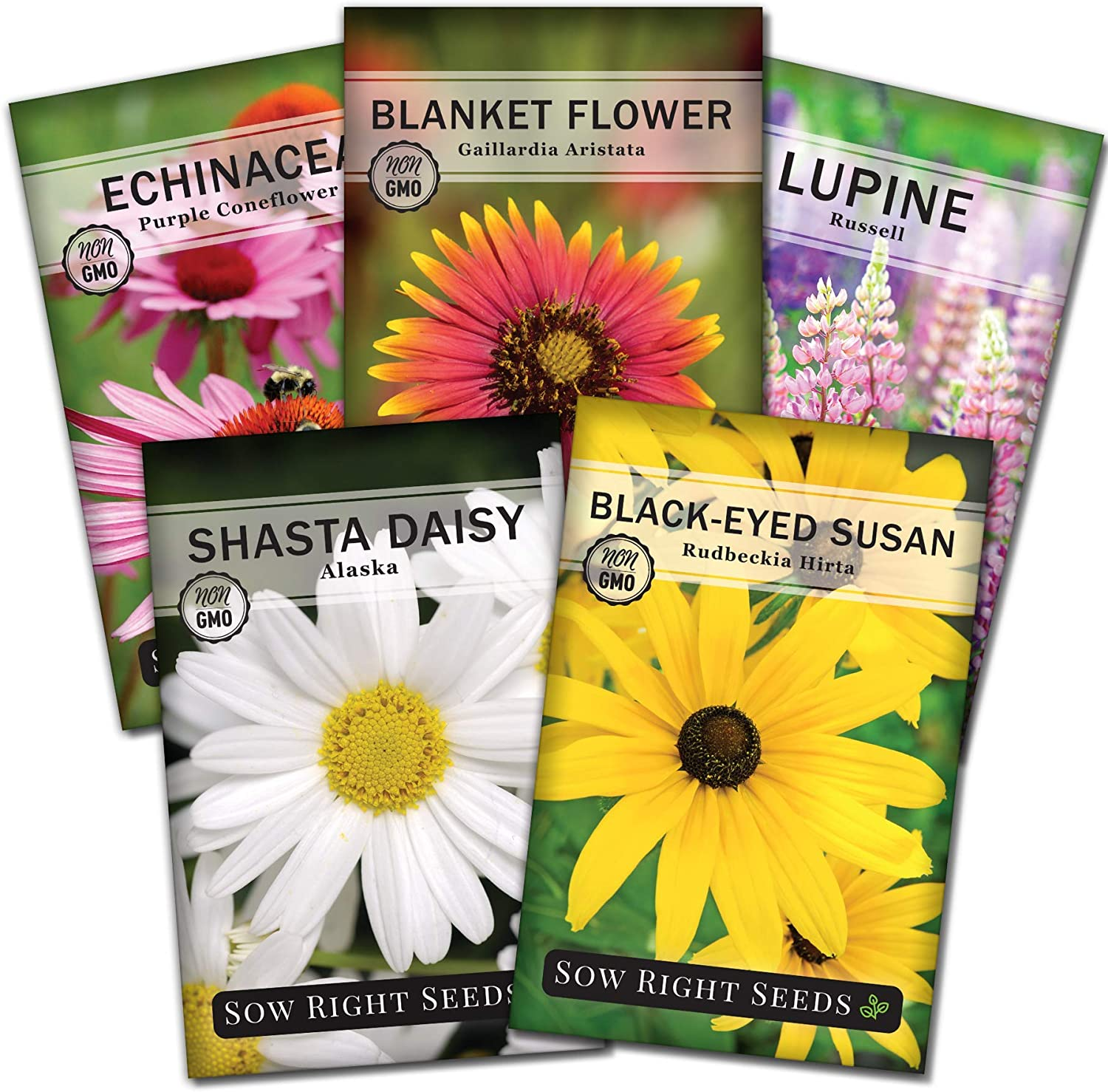 Sow Right Seeds - Perennial Flower Garden Collection for Planting - Russell Lupine, Black-Eyed Susan, Shasta Daisy, Purple Coneflower, and Blanket Flower; Heirloom Seeds, Wonderful Gardening Gift