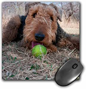 """3dRose Airedale Playing Ball in Dried Grasses, Mouse Pad, 8"""" by 8"""" (mp_230291_1)"""