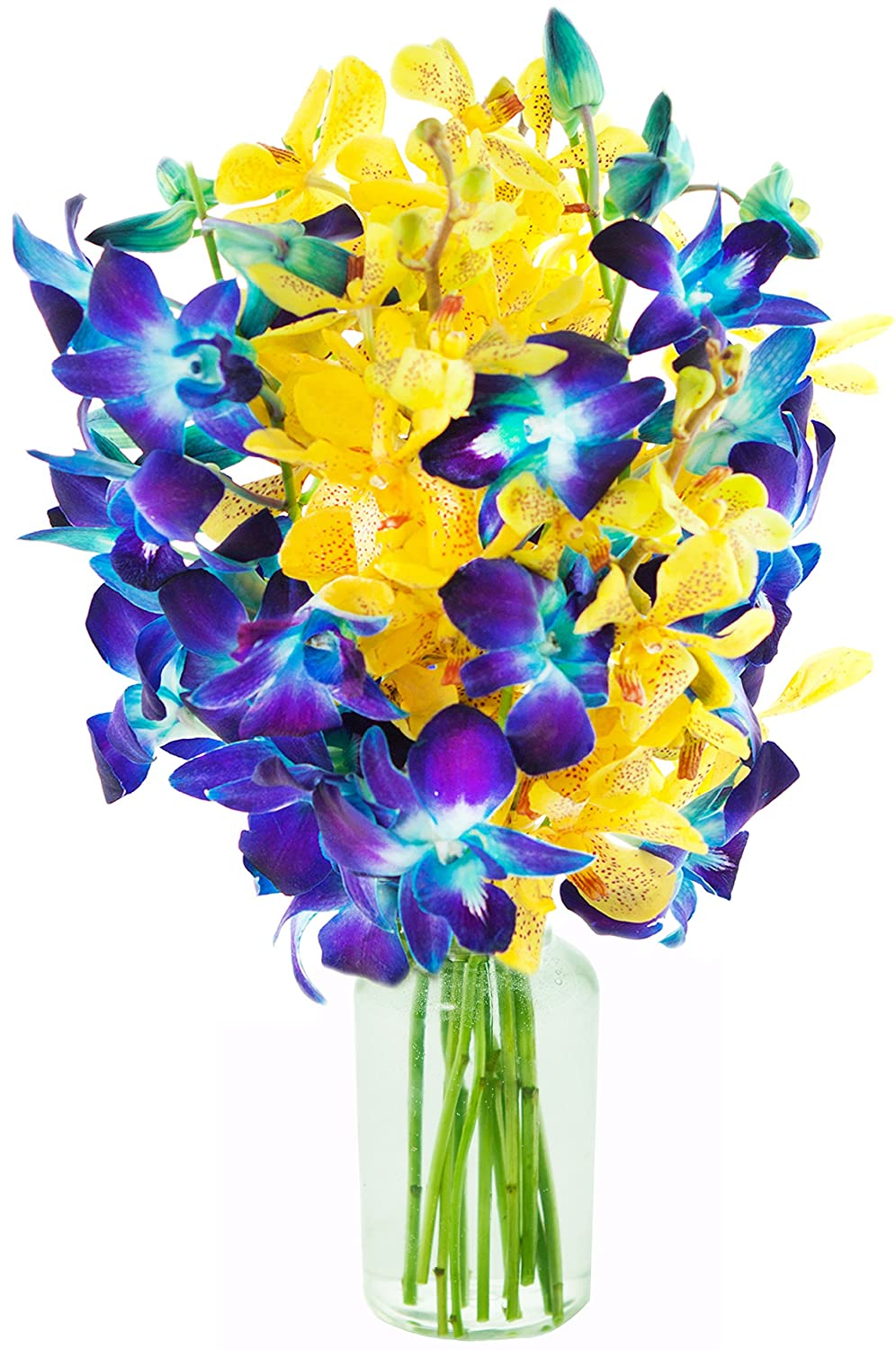 Amazon starry night with blue and yellow orchids 10 stems amazon starry night with blue and yellow orchids 10 stems with vase grocery gourmet food izmirmasajfo Image collections