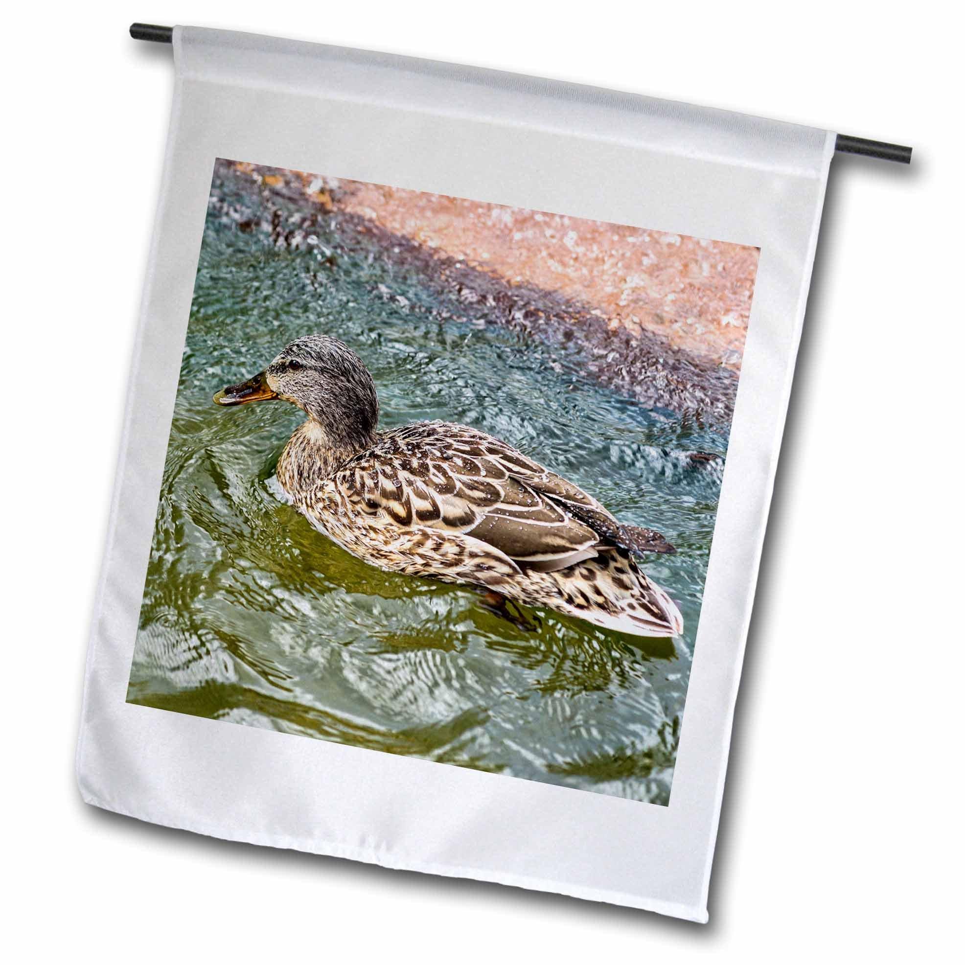 3dRose Alexis Photography - Birds - Brown mallard duck in a bubbling water of a city fountain - 18 x 27 inch Garden Flag (fl_281186_2)