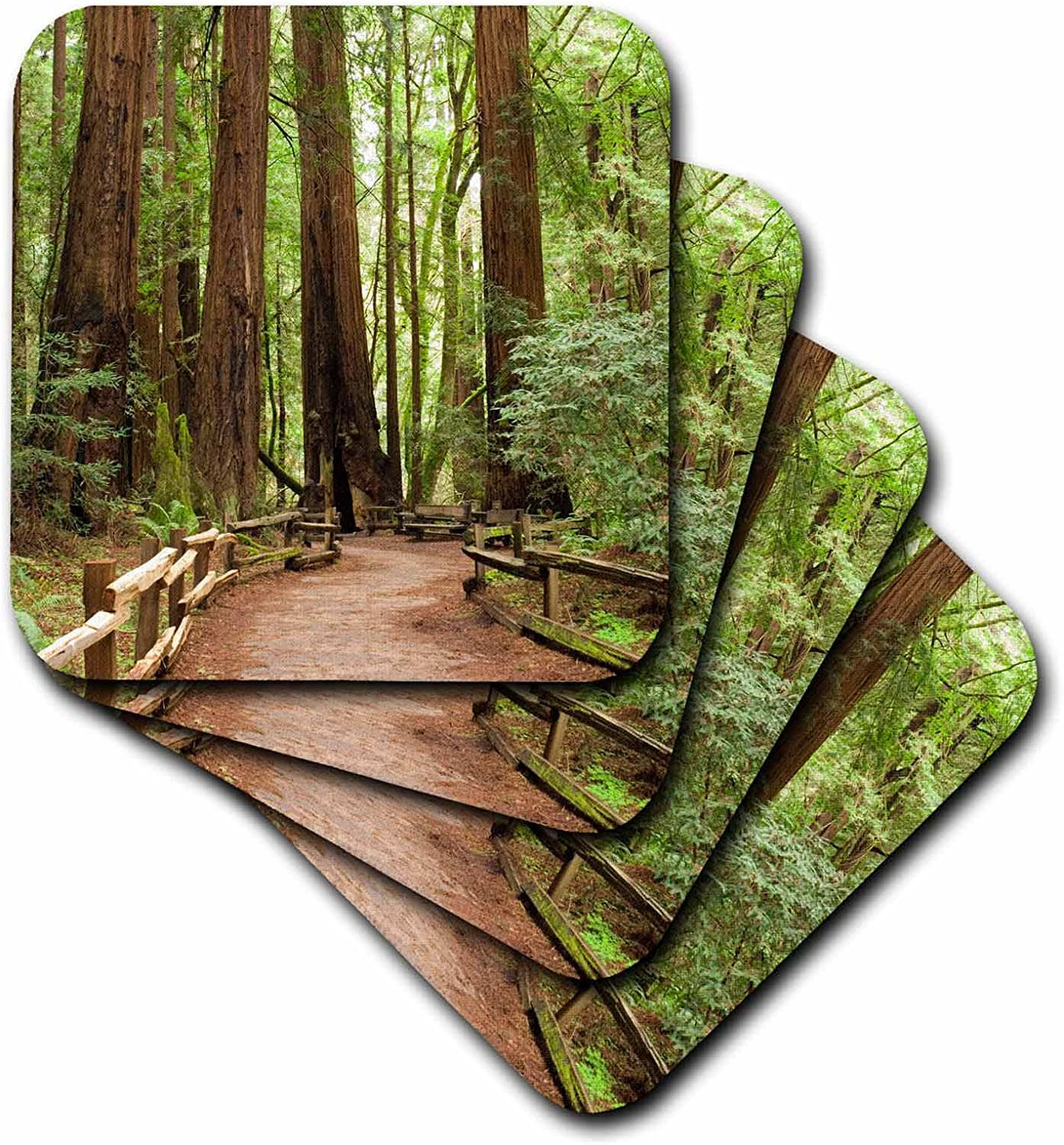 Amazon Com 3drose Cst 88412 3 California Marin County Muir Woods Nm Path Us05 Iho0157 Inger Hogstrom Ceramic Tile Coasters Set Of 4 Home Kitchen