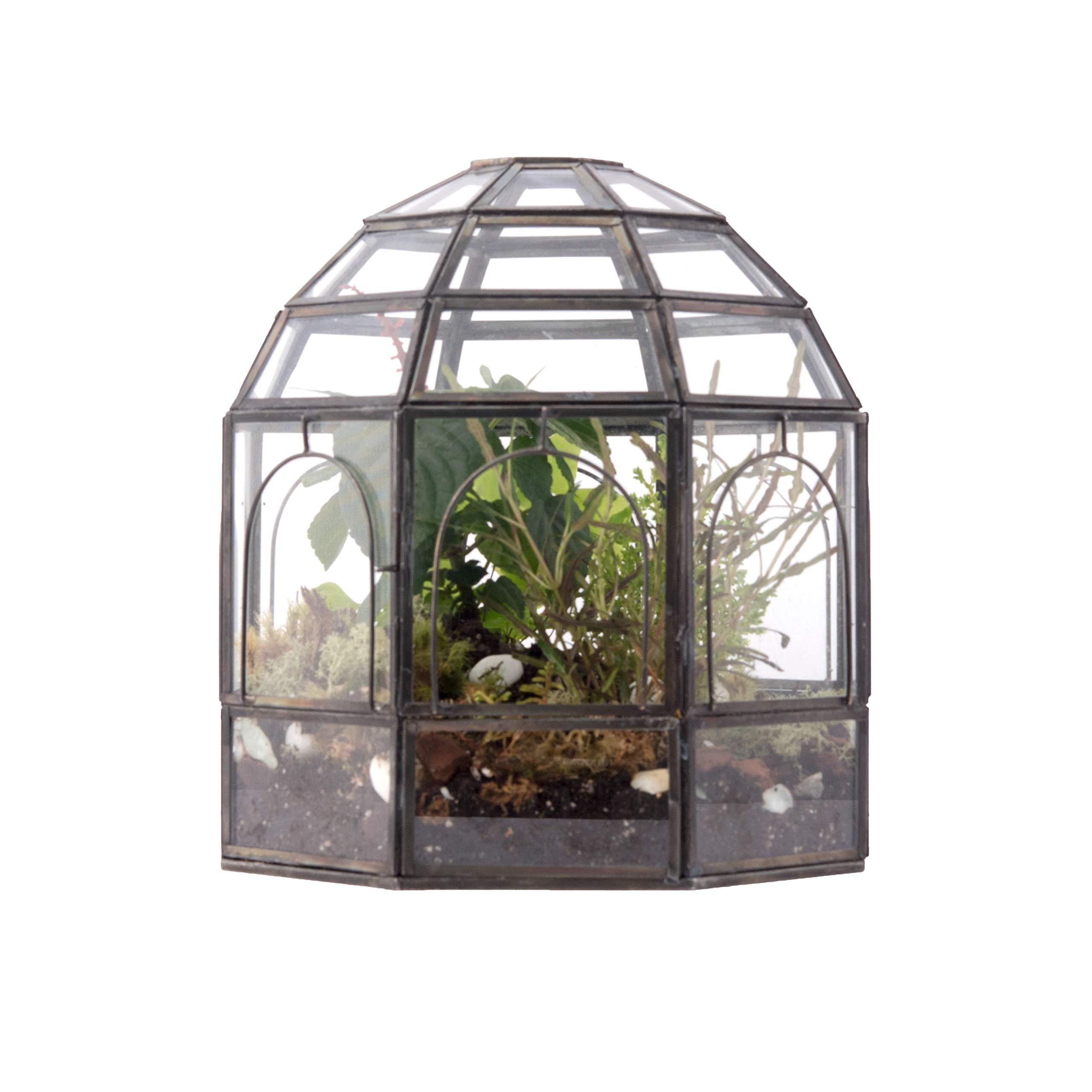 "Urban Born- Handmade Glass Terrarium, Birdcage- 9''x9''x10"""