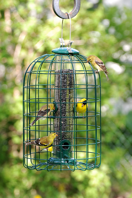 Audubon Vogelfutterstation f/ür V/ögel Eichh/örnchensicher Modell NATUBE3