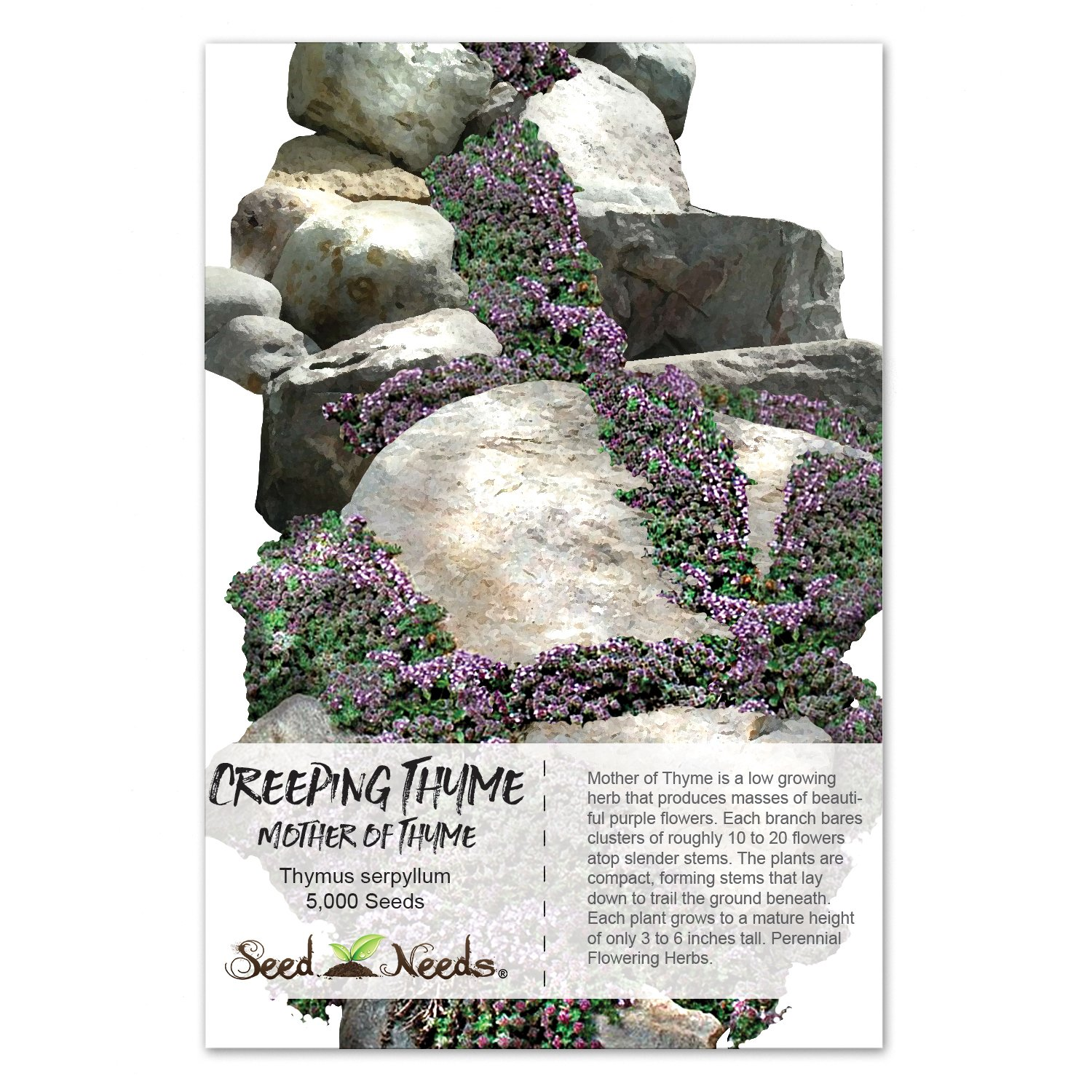 Amazon Package Of 5 000 Seeds Mother Of Thymecreeping Thyme