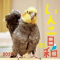 カレンダー2020 週めくりカレンダー いんこ日和 <卓上> (ヤマケイカレンダー2020)
