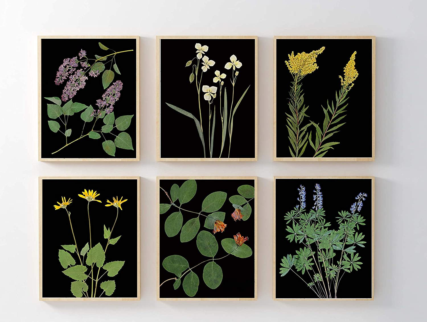 Amazon Com Set Of 6 Pressed Flower Botanical Prints With Black