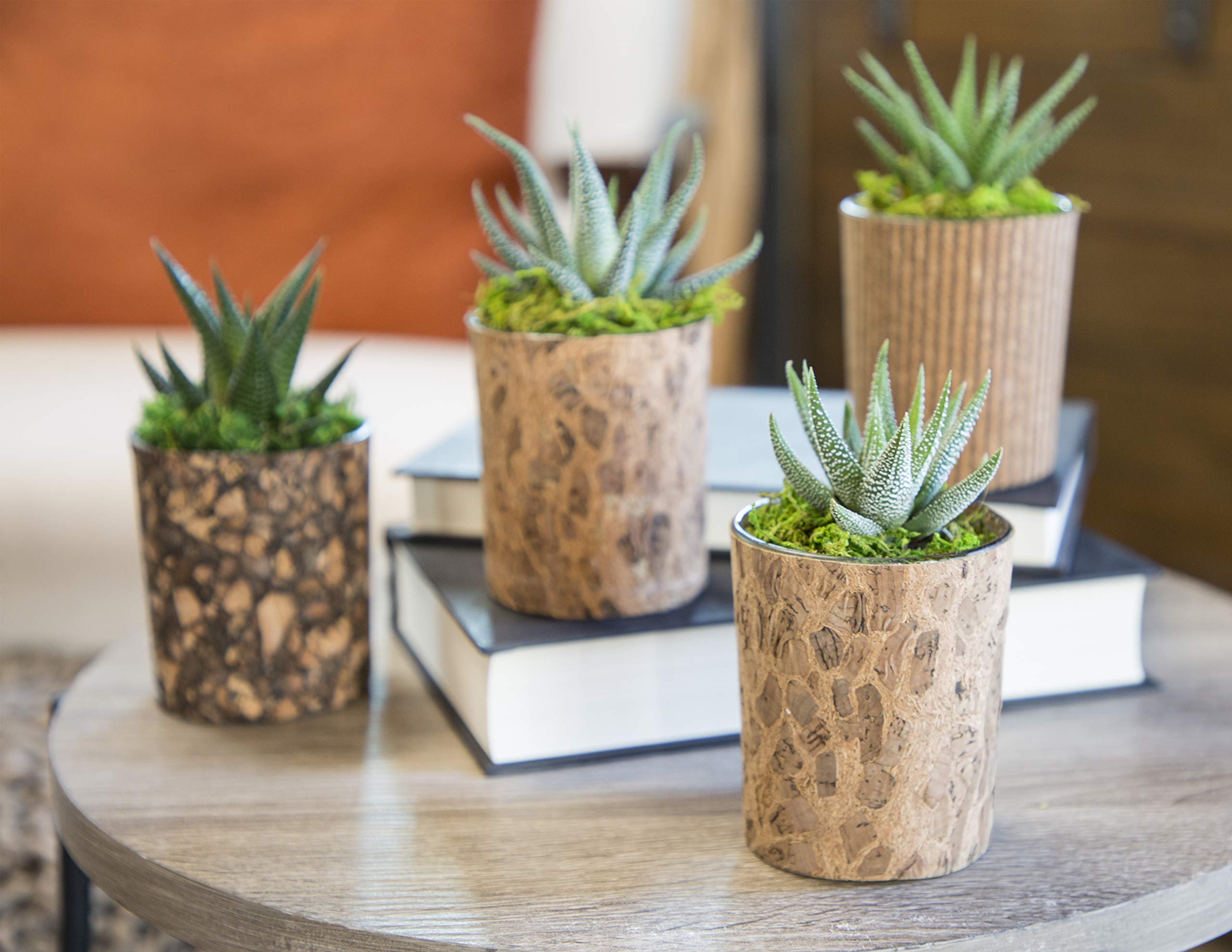 Live Succulents in Glass and Cork Containers Set of 4, From Hallmark Flowers by Hallmark Flowers (Image #2)