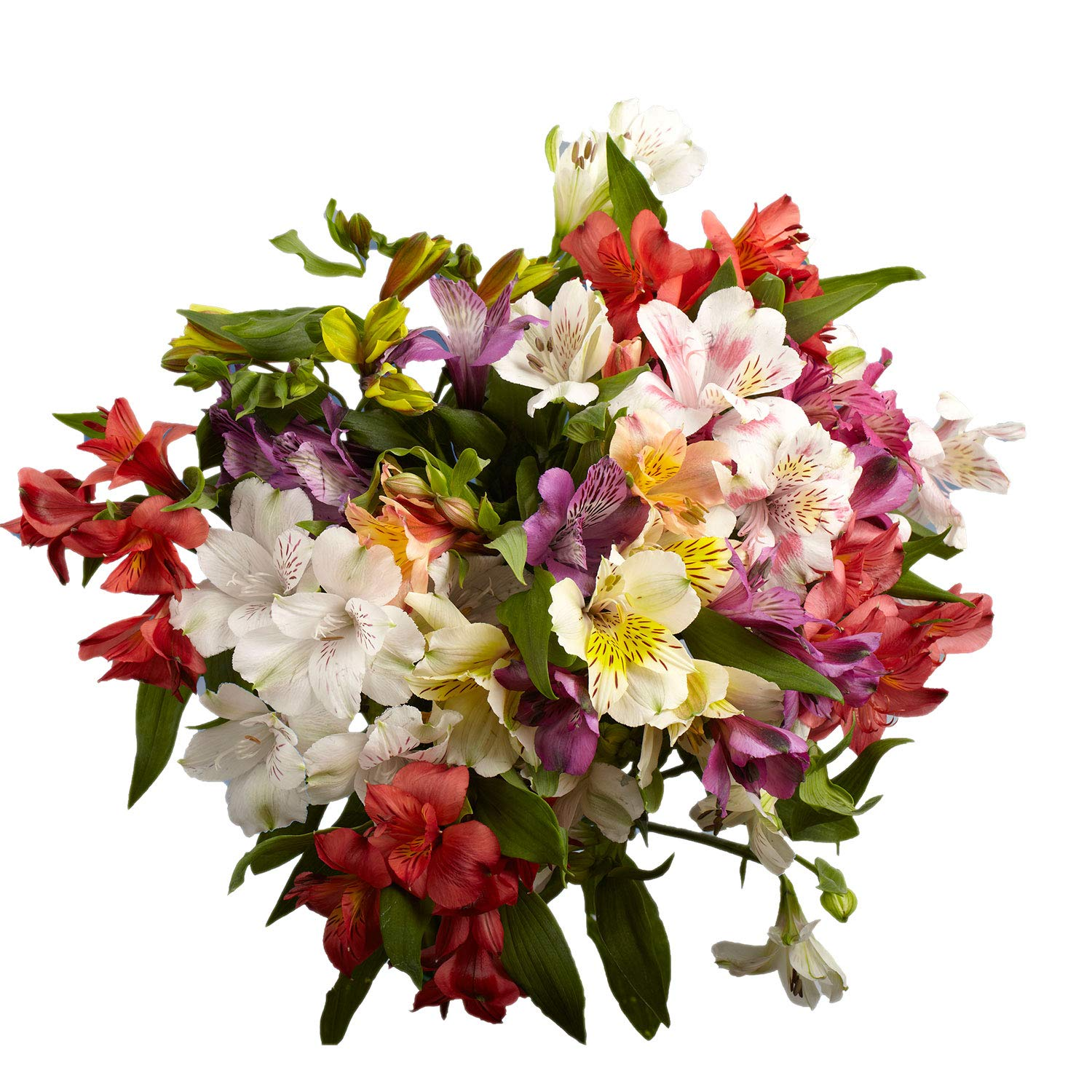 Amazon Com Globalrose Assorted Color Alstroemerias Flowers 120 Bright Blooms 30 Stems Of Fresh Peruvian Lilies Grocery Gourmet Food