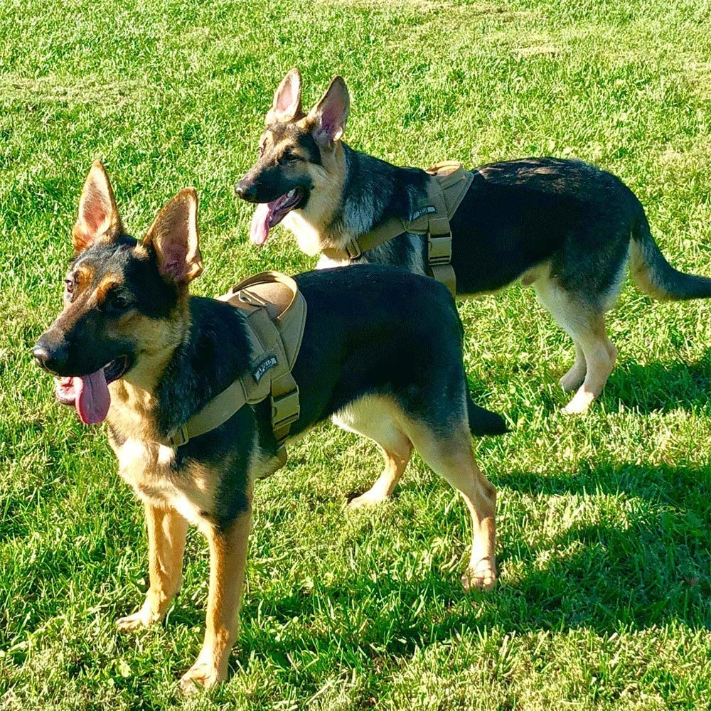 Comprar chalecos tácticos para perros