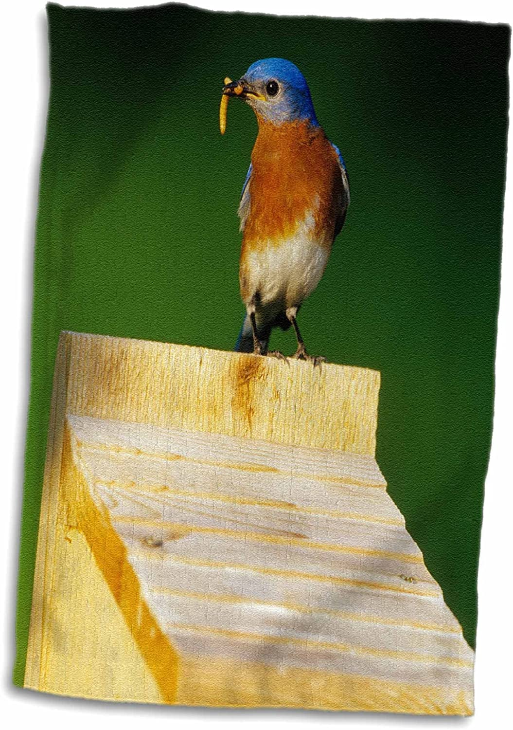3D Rose Eastern Bluebird Male with Mealworms at Nestbox-Illinois Hand Towel 15 x 22 Multicolor