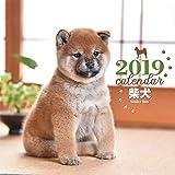 2019年大判カレンダー 柴犬