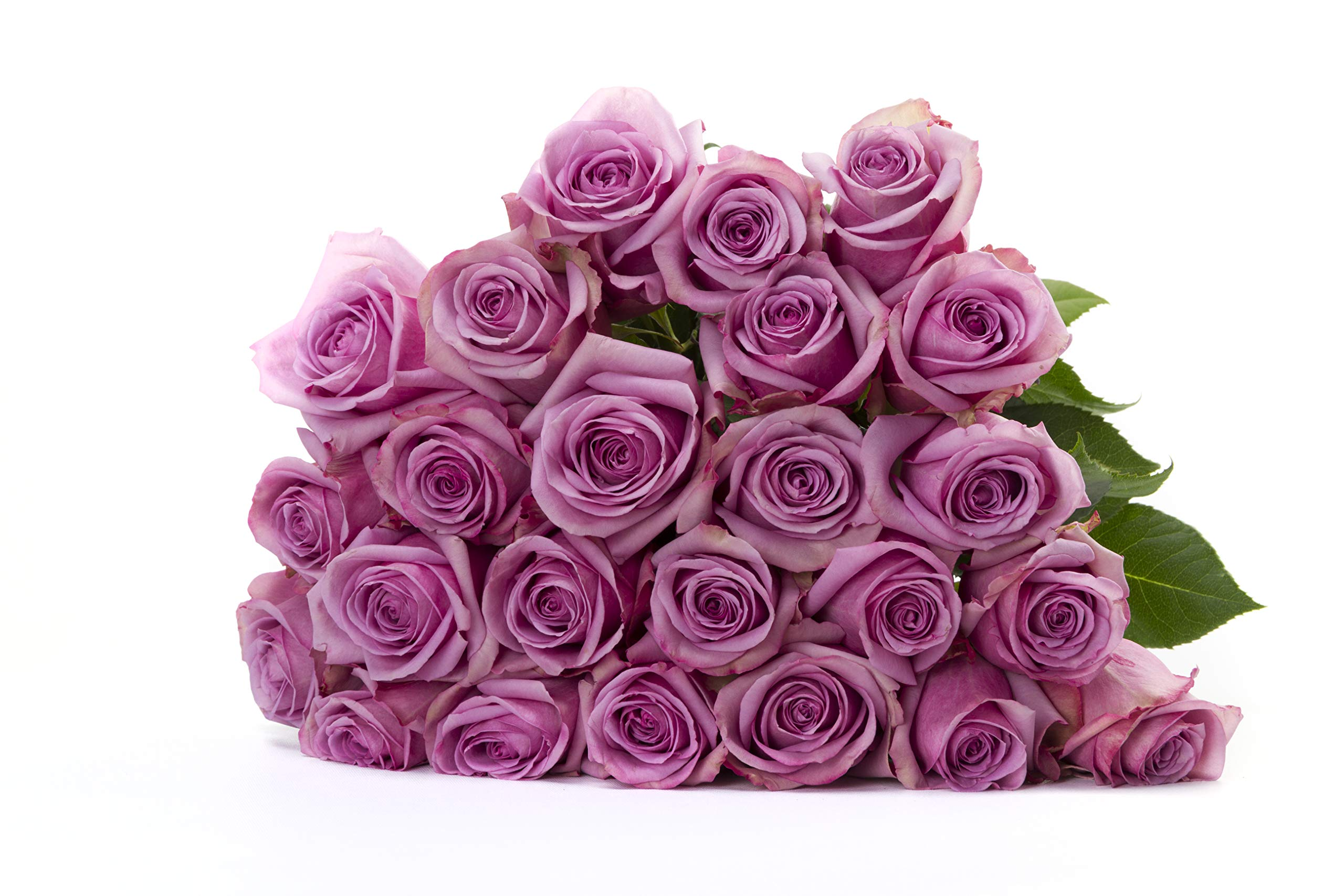 Martha Stewart Roses by BloomsyBox - Two Dozen Lavender Cool Water Roses Selected by Martha and Hand-Tied, Long Vase Life