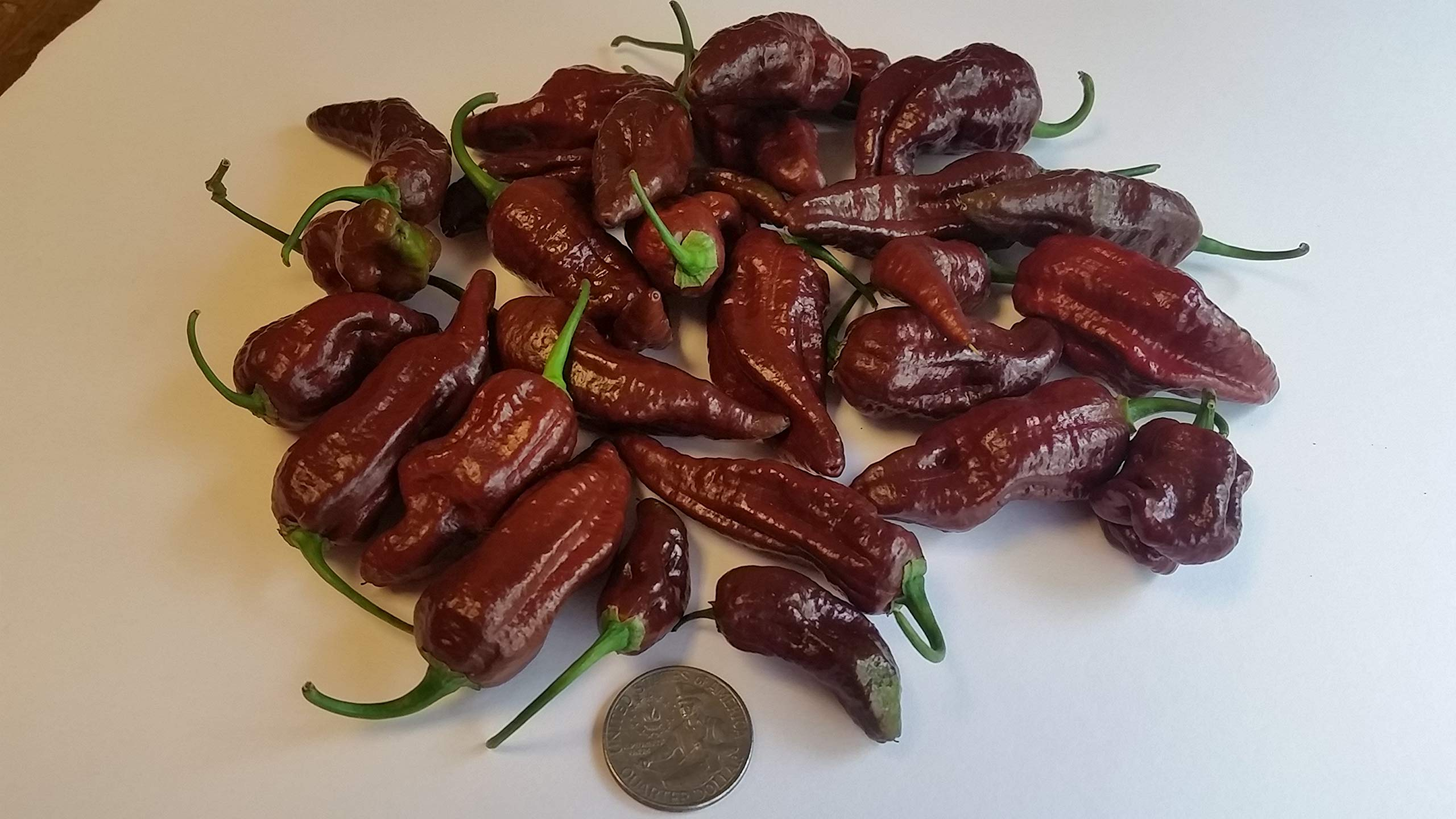Fresh Super Hot Peppers - Mixed Box: All Chocolate/Brown Colored Peppers