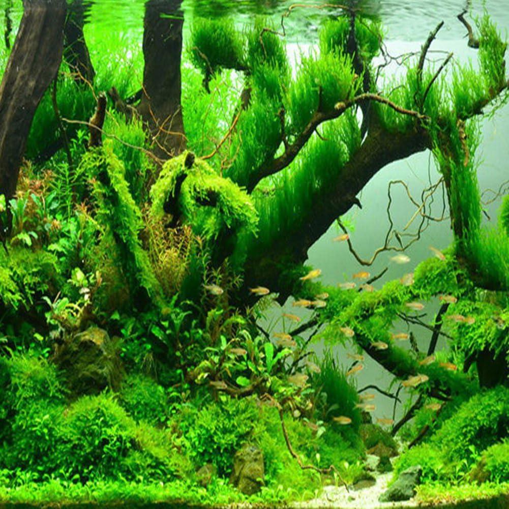 Zantec-Samen Garten-Pflanzen Aquarium Dekoration Gras Wasser Schwimmend wie Pflanze Nahaufnahme von Fische Tank 1