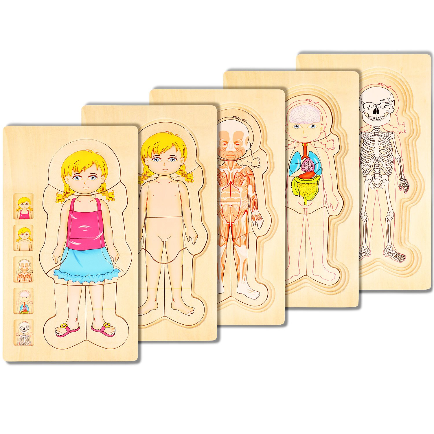 COGGIFEL Human Body Puzzle Toys 5-layer Wooden Puzzle Body Structure Children Early Education Intelligence Training Plaything