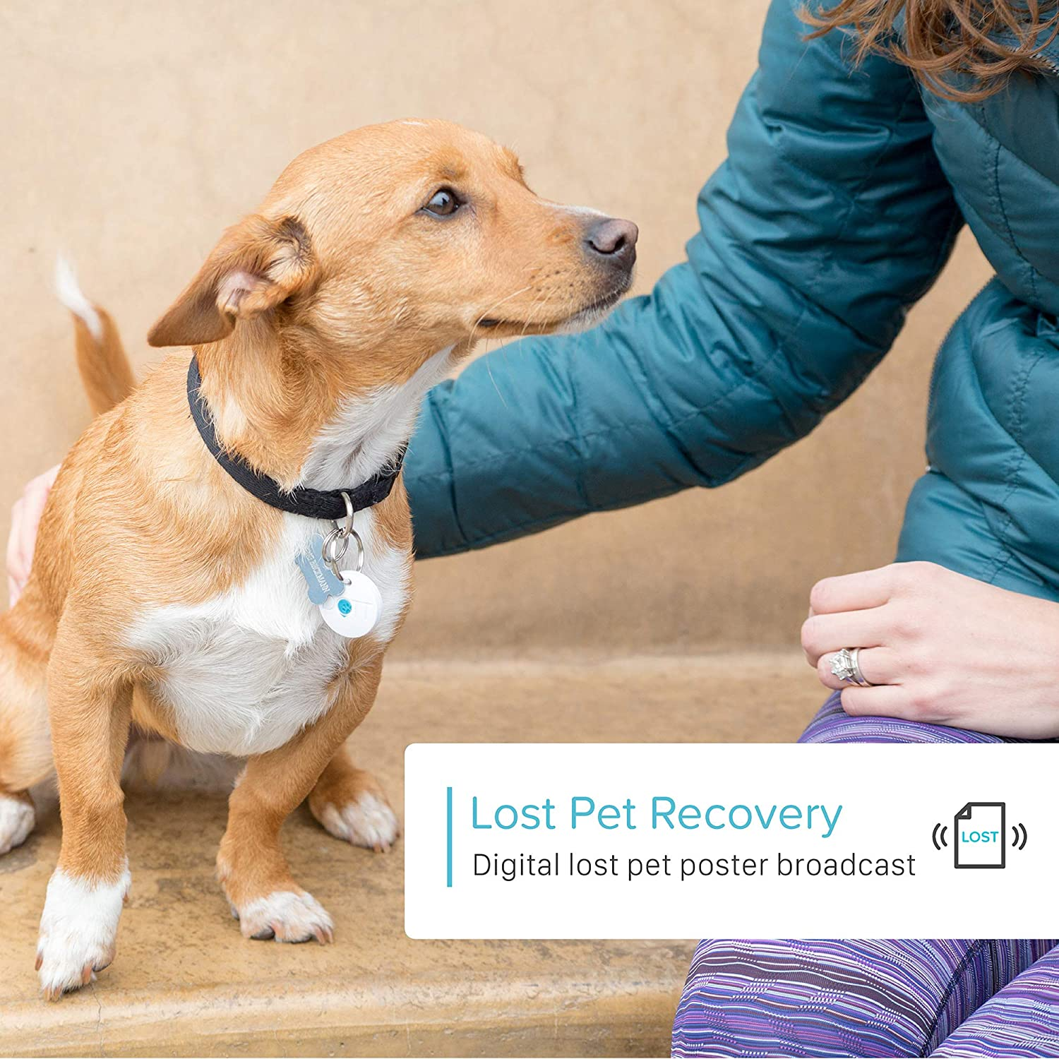 Every Missing Pet Poster Tells Story >> Amazon Com Dott The Smart Dog Tag Bluetooth Tracker For Dogs And