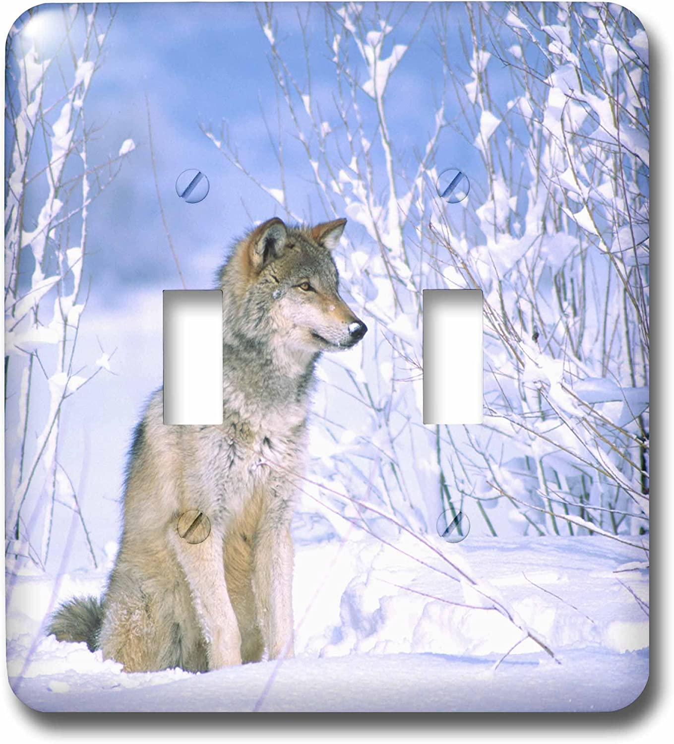 3drose Lsp 83897 2 Timber Wolf Sitting In The Snow Canis Lupus Na02 Dno0317 David Northcott Light Switch Cover Multi Switch Plates Amazon Com