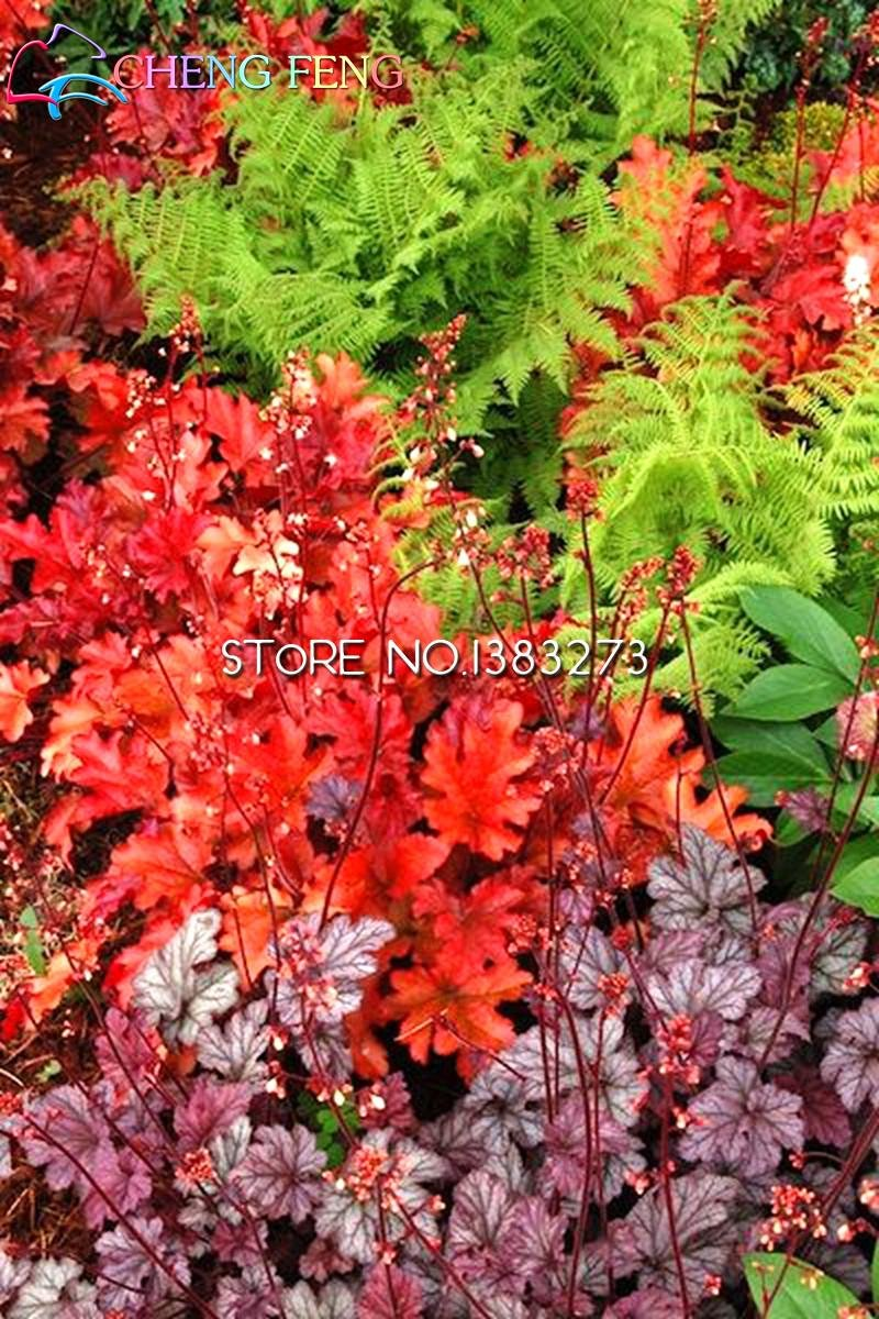 Time Limit!!!new Arrial Rainbow Heuchera Fresh Seeds Interesting Grass Seed Flora Semillas Bee Gift SVI